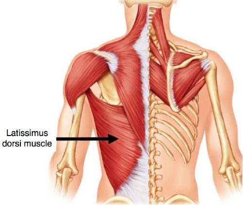 Microsurgery with Latissimus dorsi muscle
